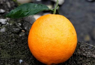 冰糖橙怎么吃 冰糖橙好吃吗